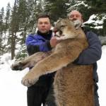 Охота на пуму в Айдахо